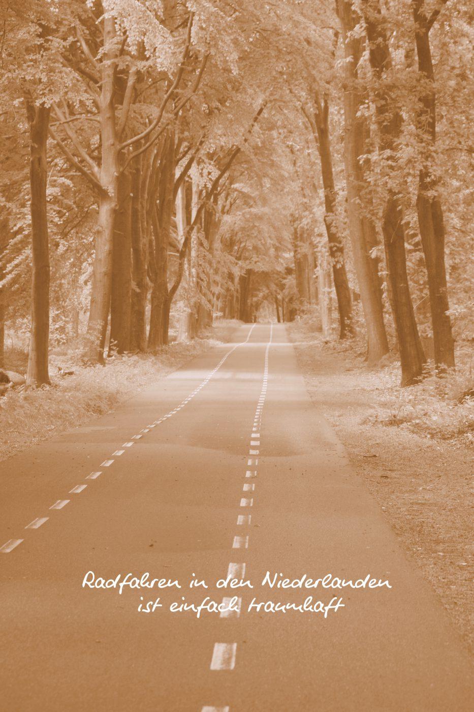 Warum sich eine Radreise nach Holland lohnt 1