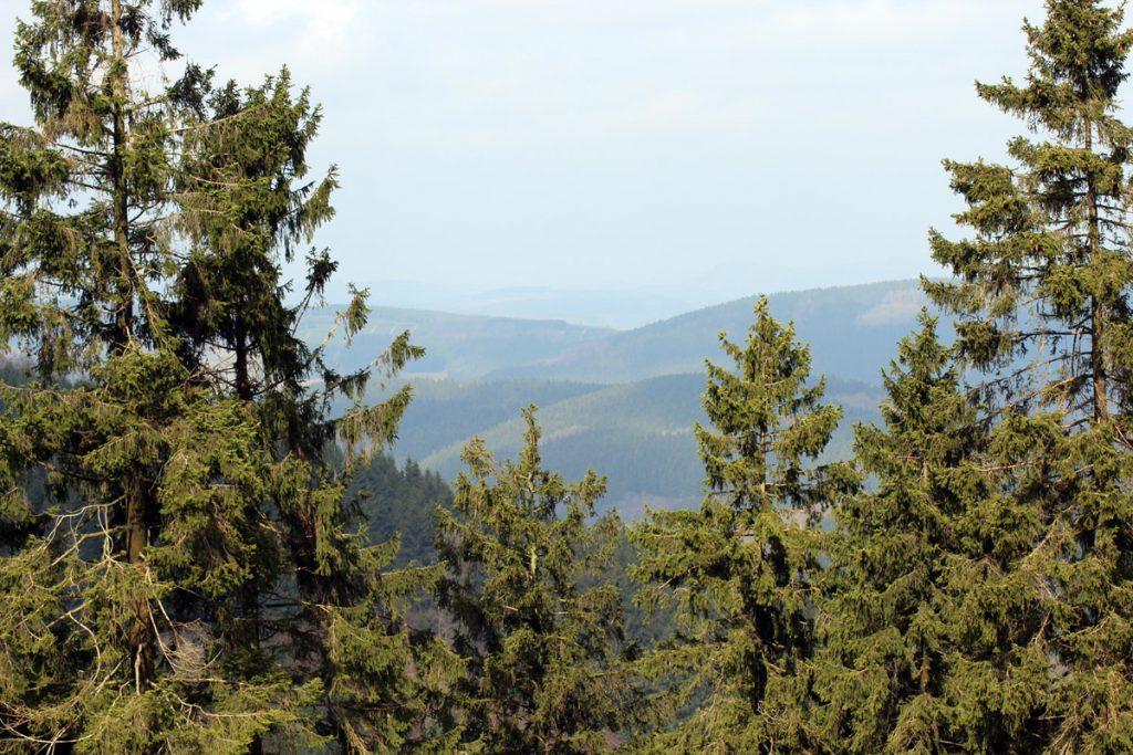 Wald sauerland