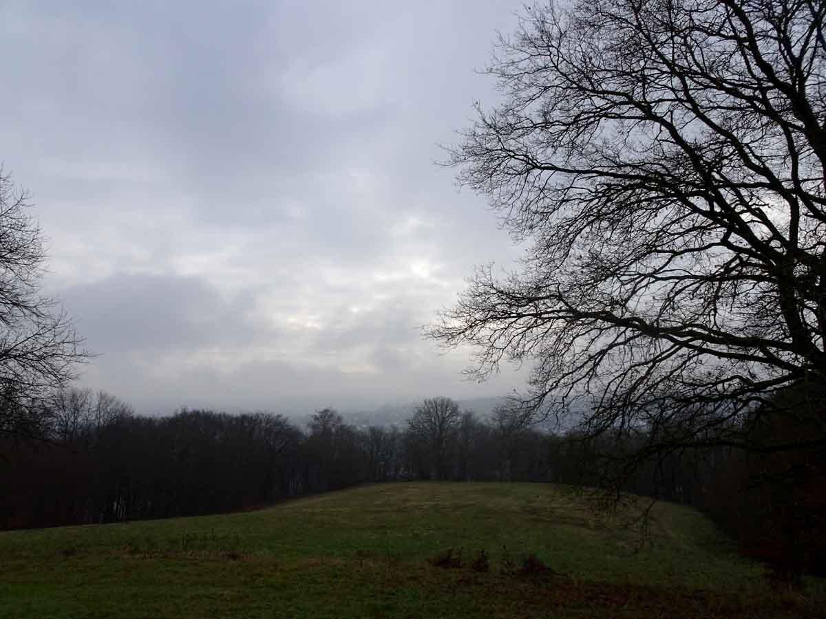 Der Wildwiesenweg 3