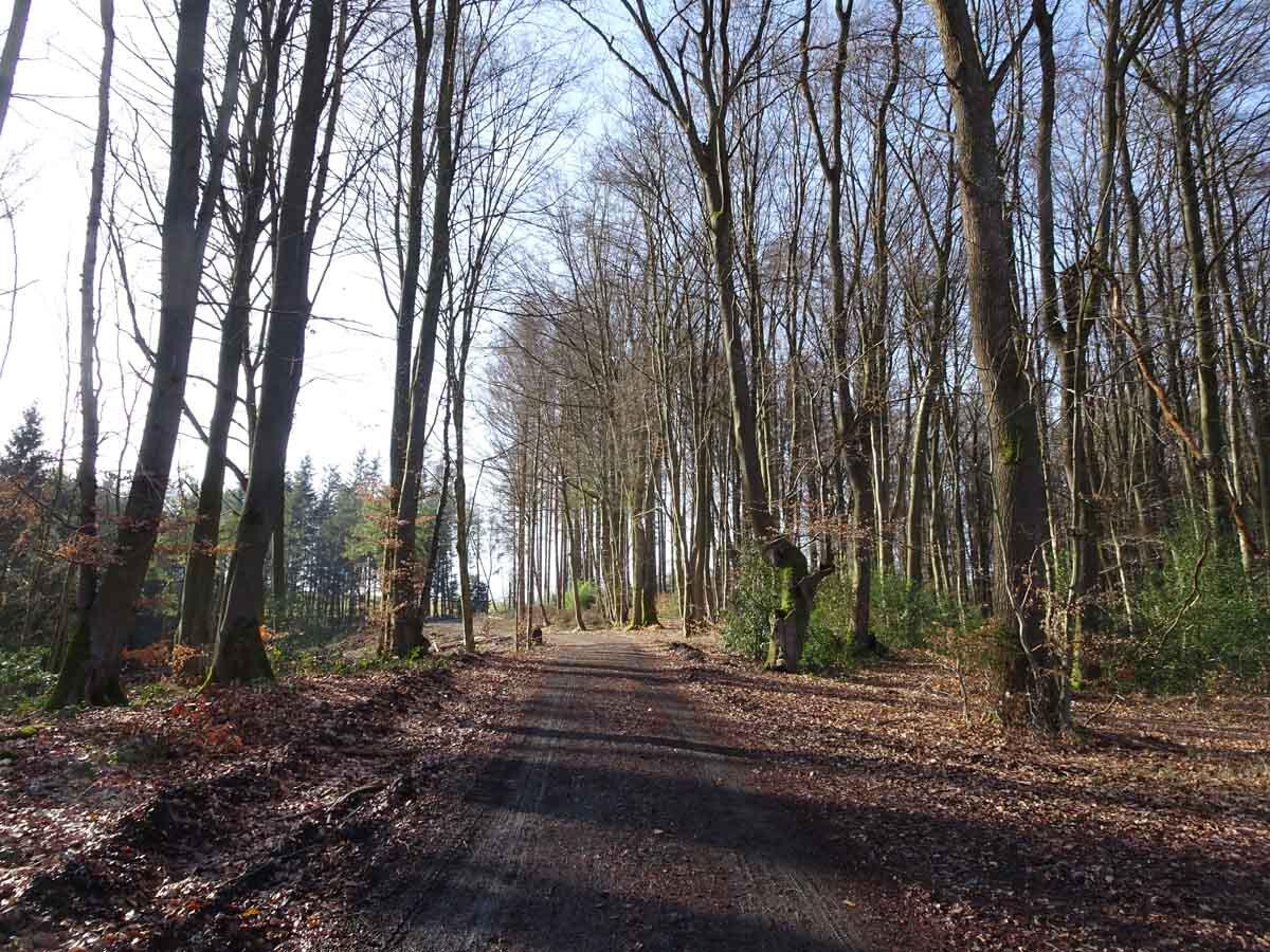 Rundwanderweg Wahnbachtalsperre 3