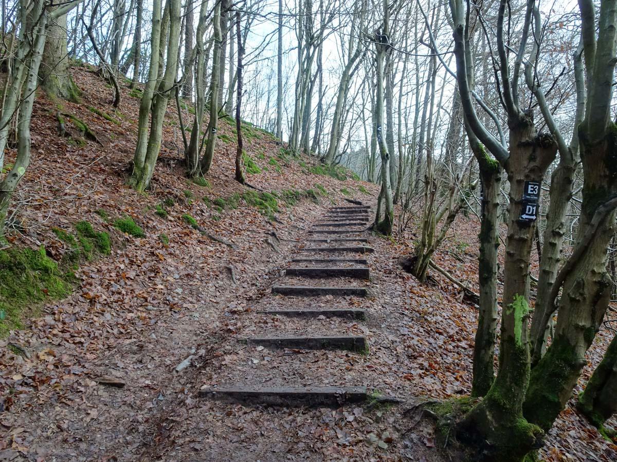 Wandern im Bergischen: Der Wanderweg D 1 Siefen, Wälder und Höhen 1
