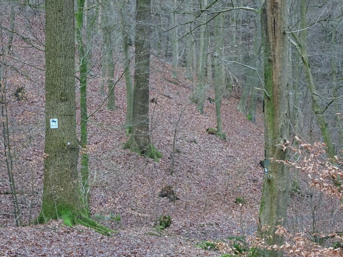 Bergisches Land D 8 7