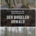 Birgeler Urwald