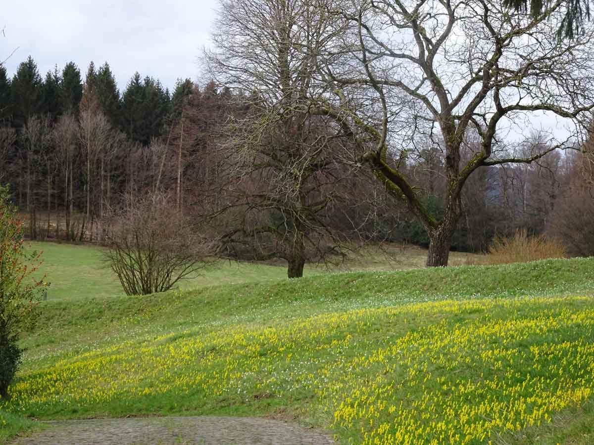 Wanderung von Federath ins Schlingenbachtal 3