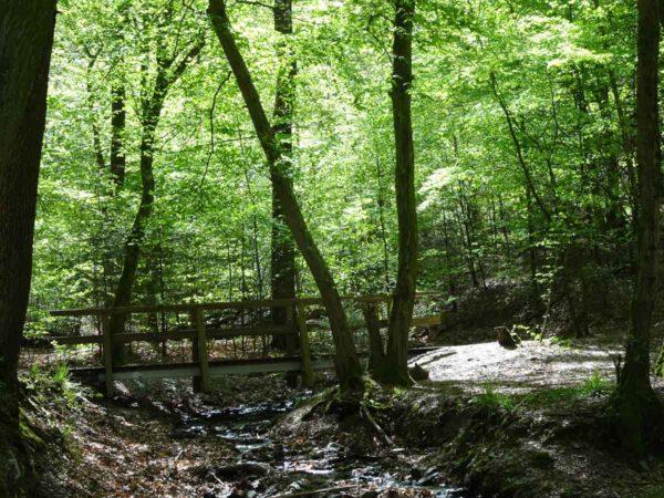 7 Tipps für Wanderanfänger 3