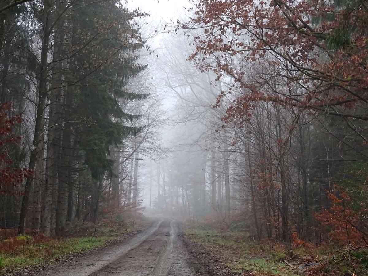 Der Wildwiesenweg 4