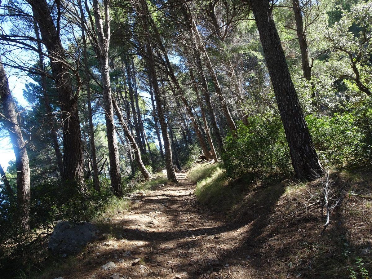 Waldweg GR 221