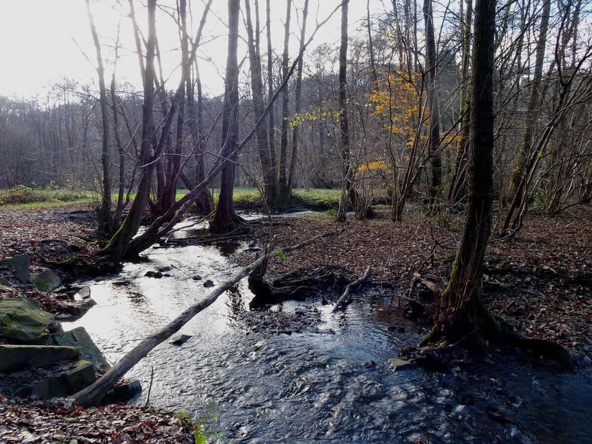 Wanderung durch das Gelpe- und Saalbachtal 6