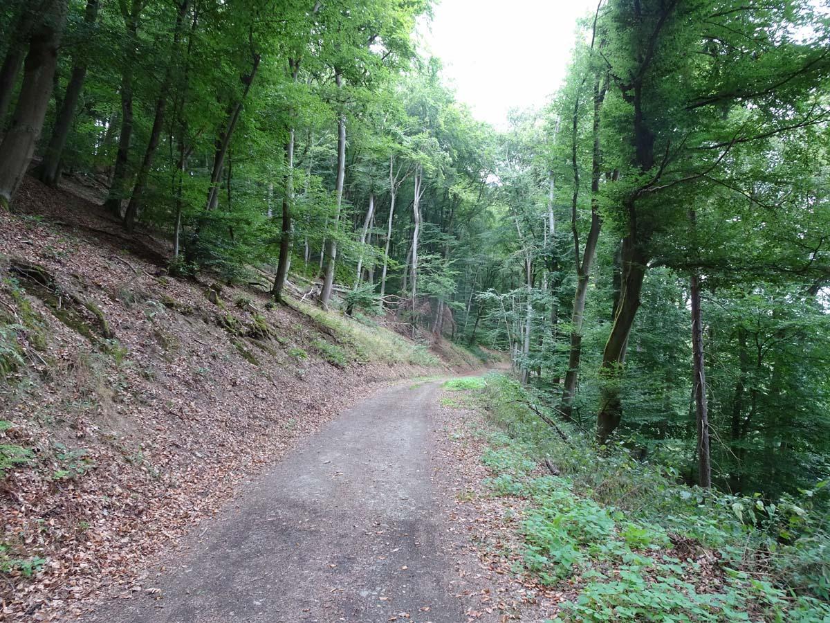 Eifeltraum Forstweg
