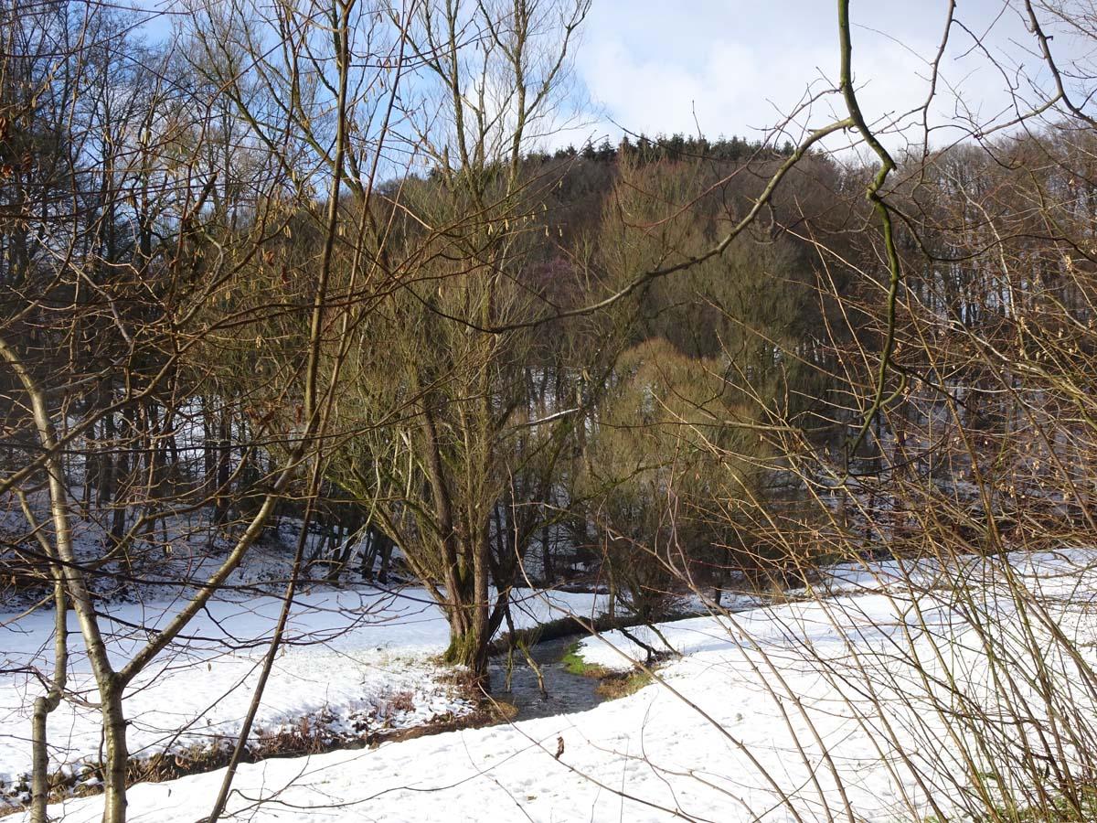 Eifgenbachweg Tal
