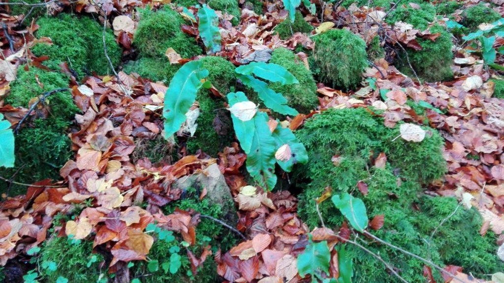 Farne Mullerthal Trail