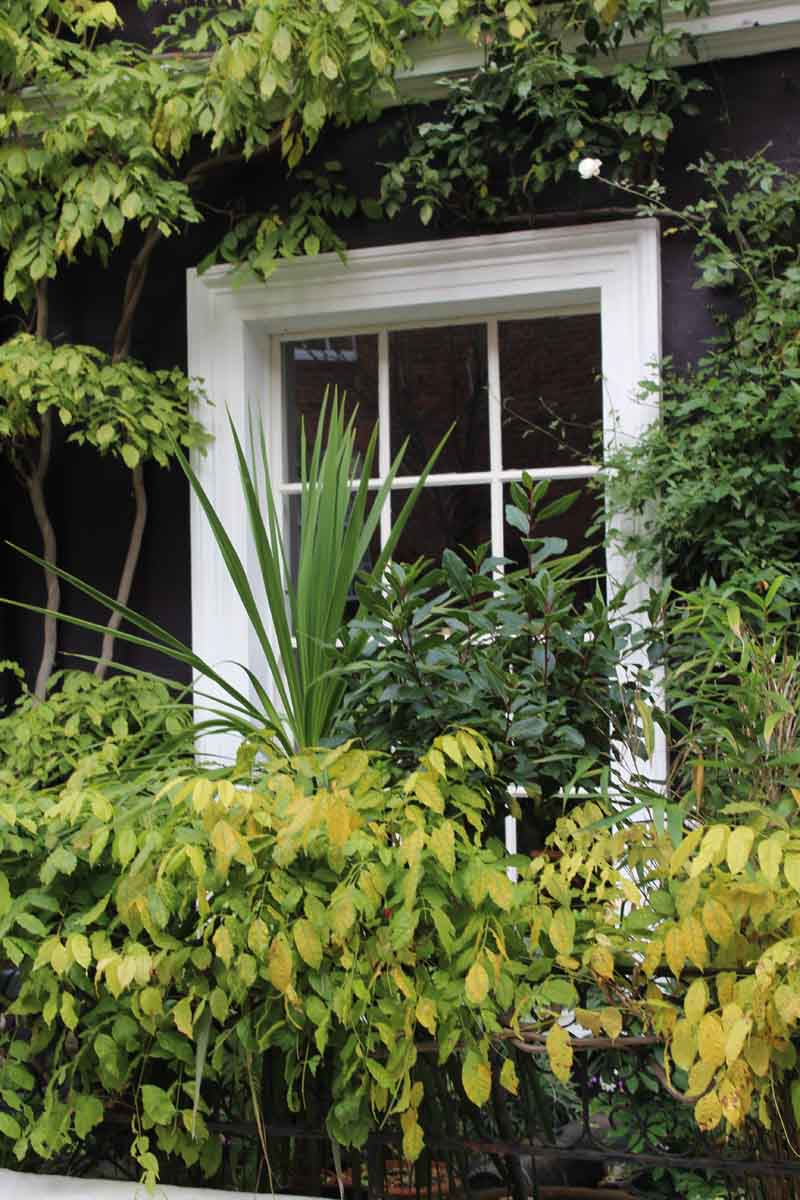 Fenster Notting Hill