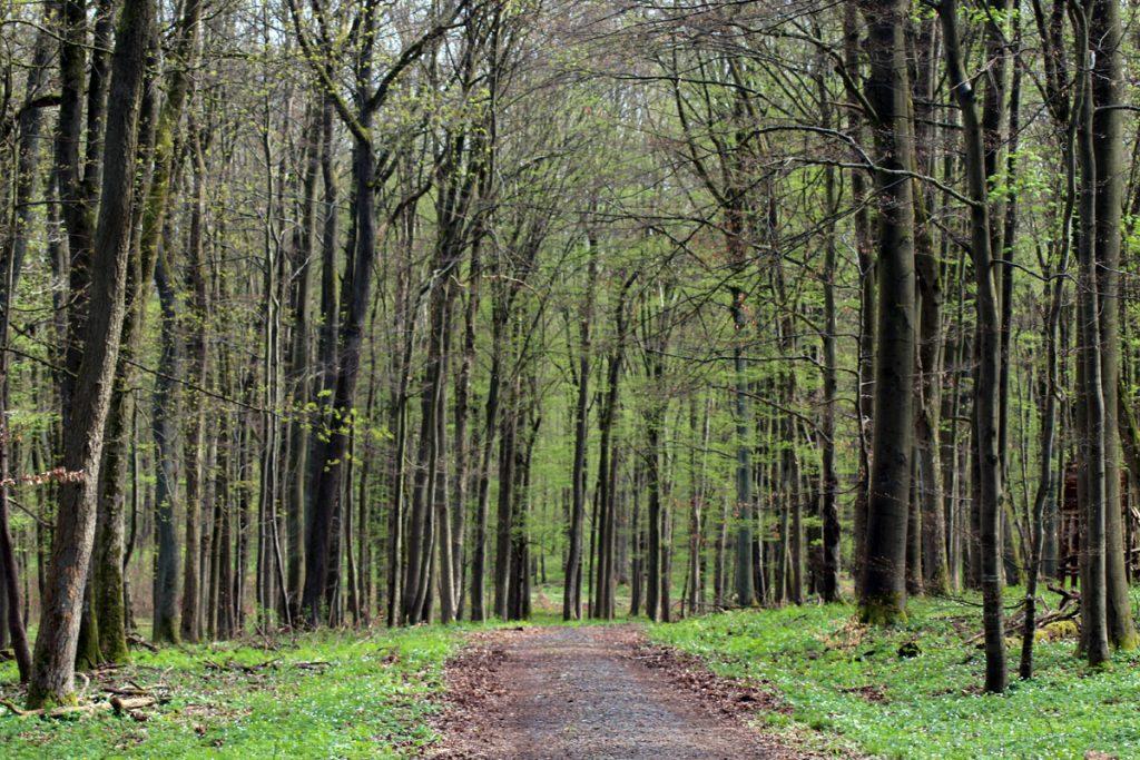 Hexenstieg Forstweg