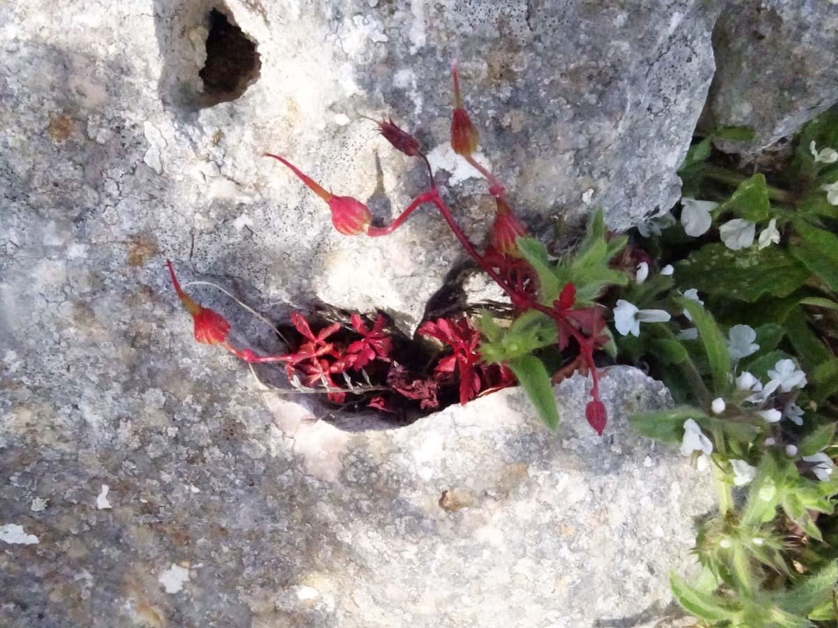 GR 221 Kleine Pflanze