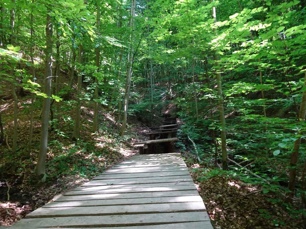 Durch das Tretschbachtal zur Löwenburg 4