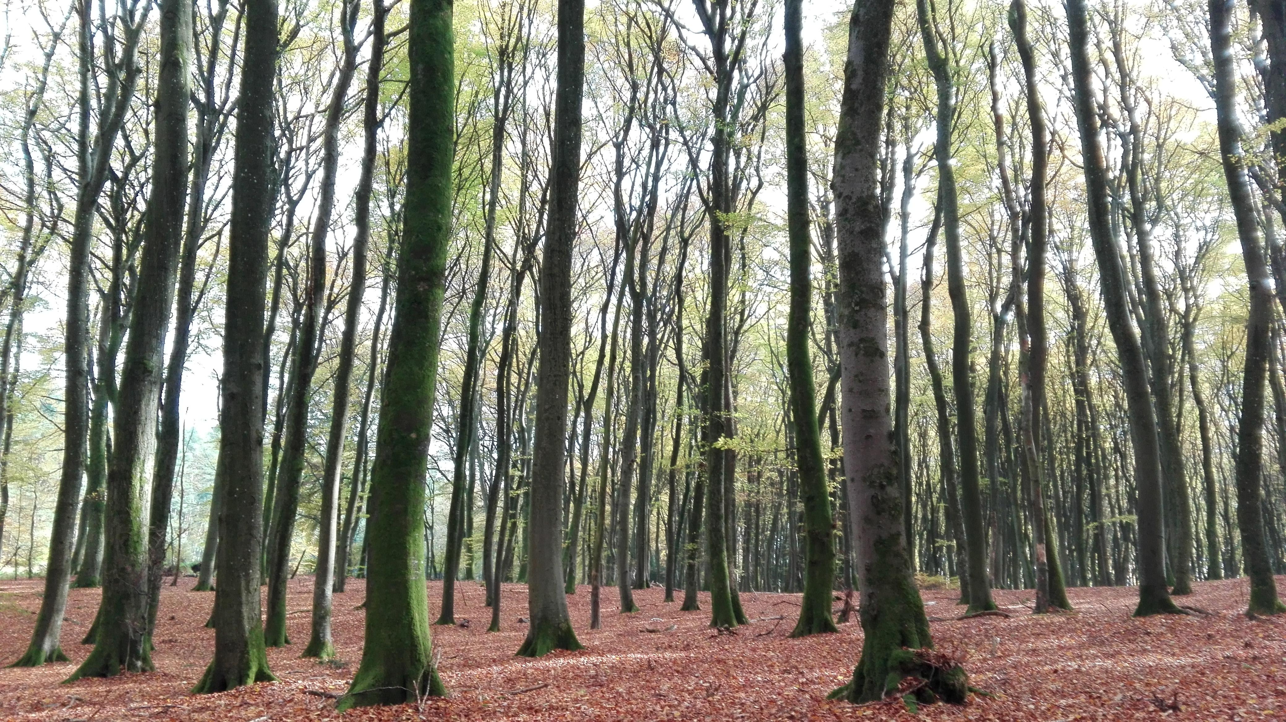Wald und Wiesen Impressionen - cover