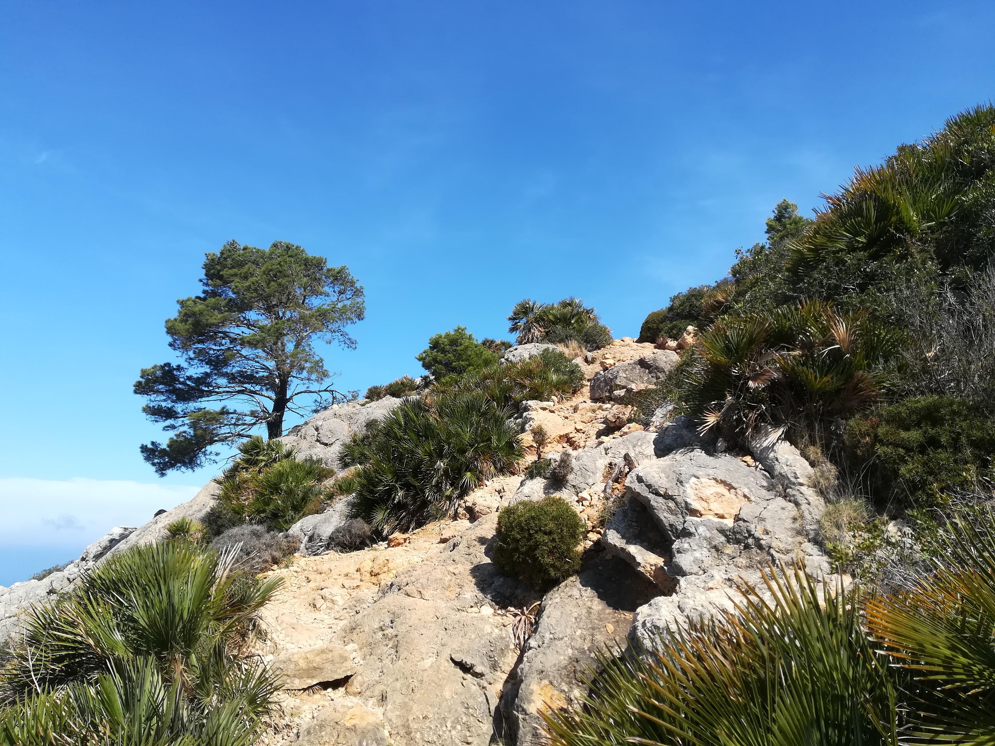 Wanderung auf dem GR 221 - Ein Erlebnisbericht 4