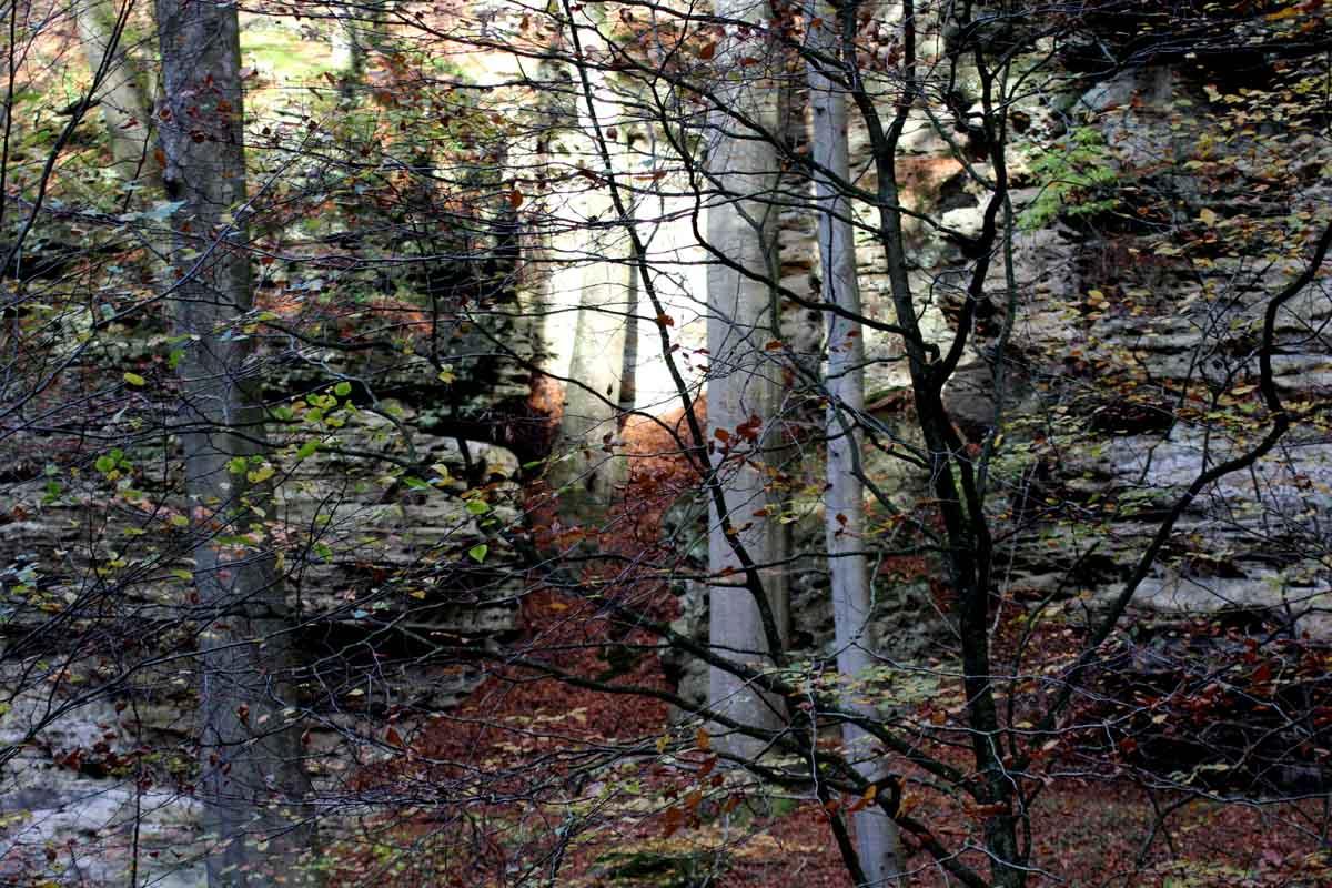 5 Tage auf dem Mullerthal Trail 1