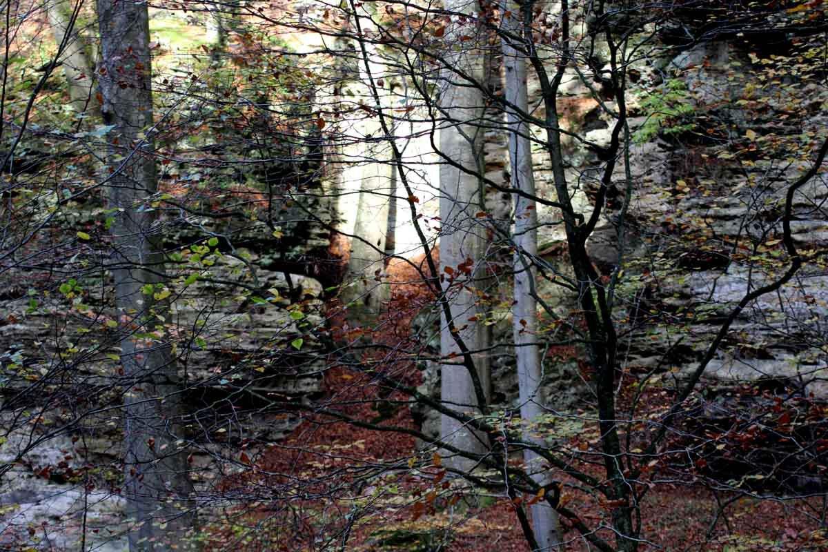 Warum der Mullerthal Trail für mich ein Top Trail ist 1
