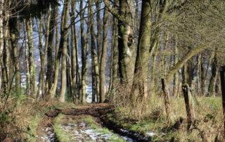 Der Wanderweg Süd bei Overath 8