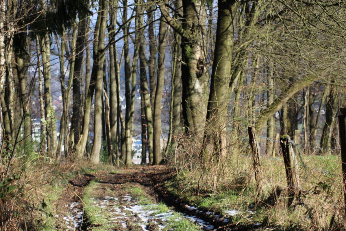 Der Wanderweg Süd bei Overath 1