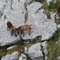 Wanderung durch die Schlucht der Ardèche 2