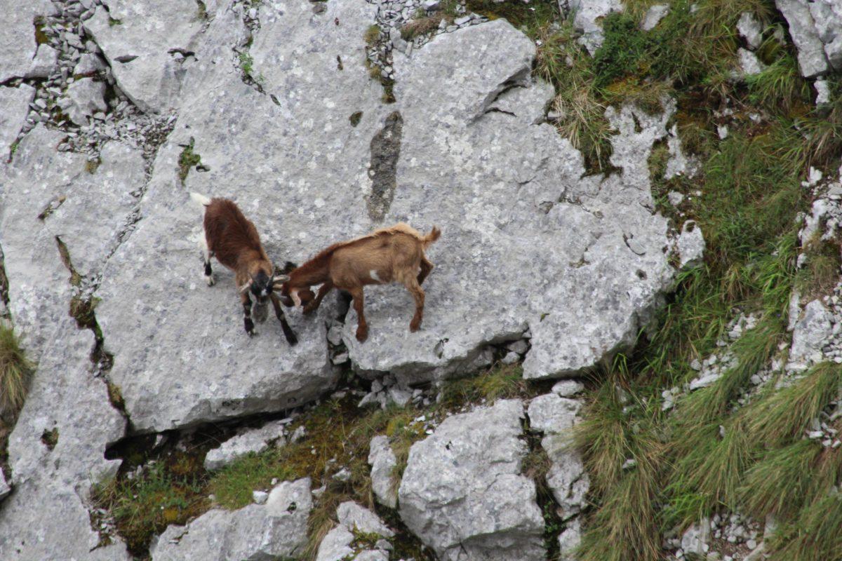 Die Picos de Europa und der Senda del Cares 1