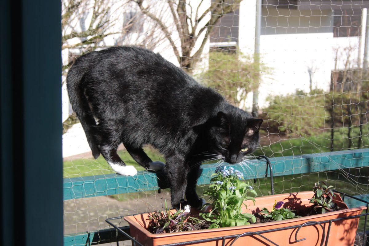 Katzenbetreuung auf Reisen