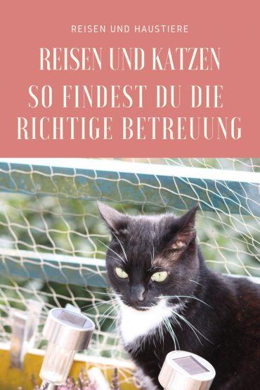 Katzenbetreuung auf Reisen so findest du die richtige
