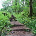 Der Keltenpfad bei Gerolstein 12