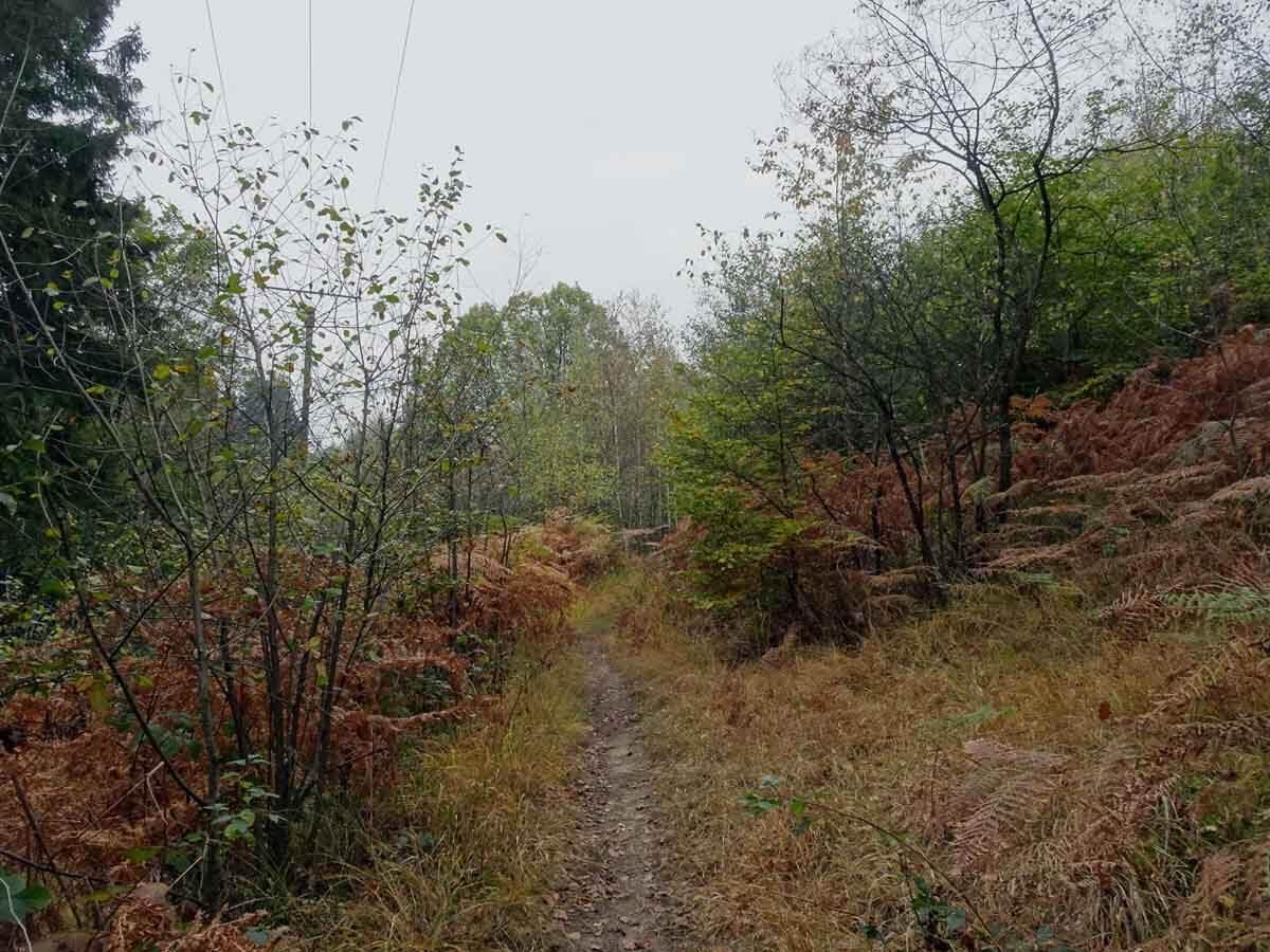 Auf dem Talsperrenweg D 2 über Berg und Tal 2