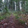 Wanderung auf kleinen Pfaden durch den Scharpenacken 14