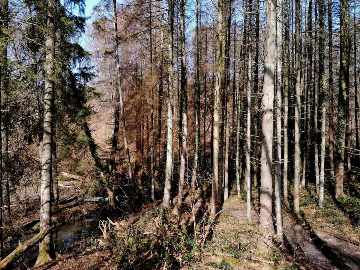 Rundweg Wenigerbach und Naafbachtal 5