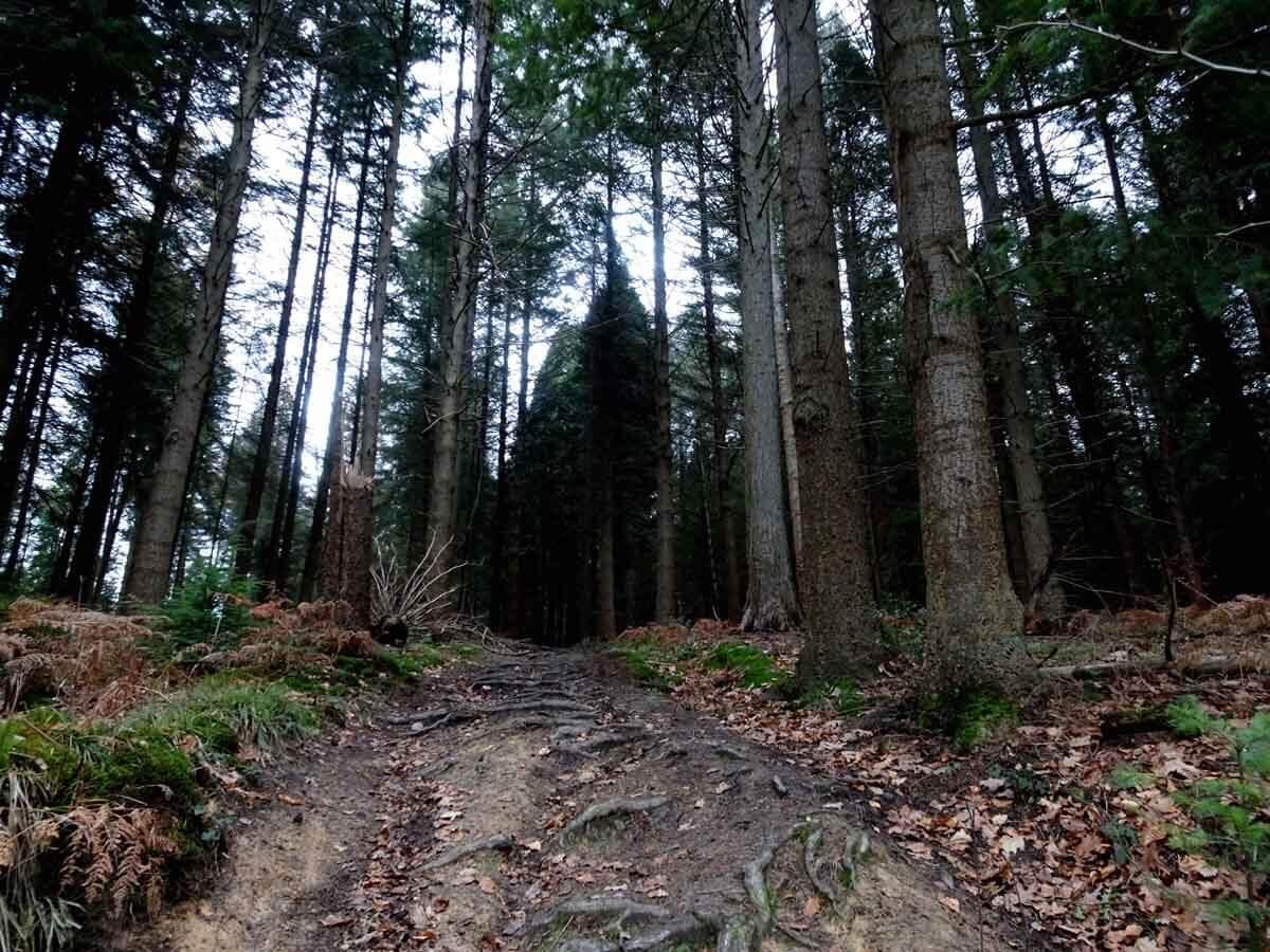 Wanderung auf kleinen Pfaden durch das Burgholz 4
