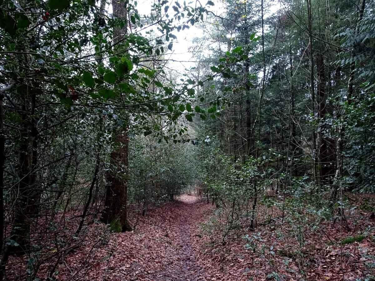 Wanderung auf kleinen Pfaden durch das Burgholz 2