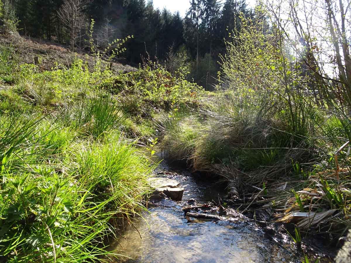 Bergbauweg am Brunnsbach