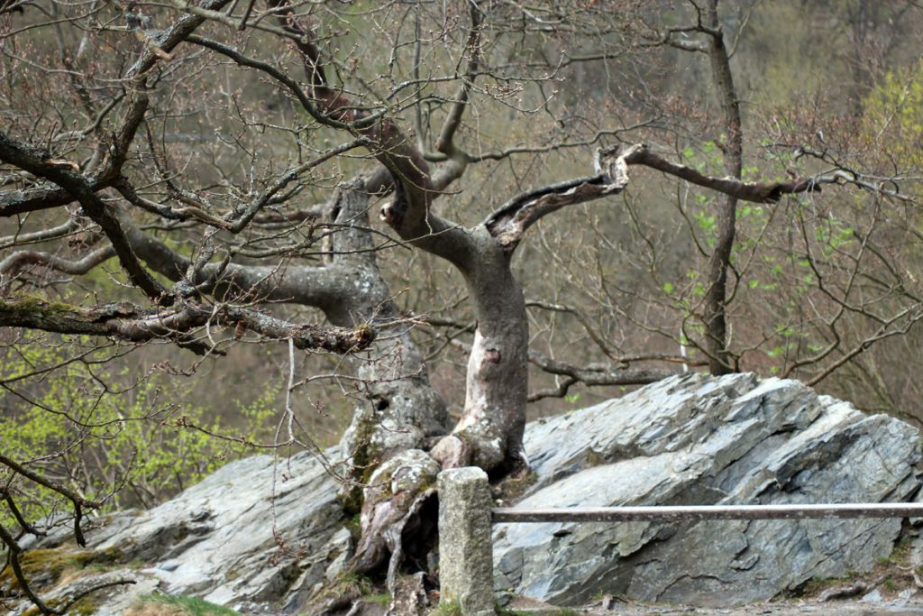 Knochiger Baum