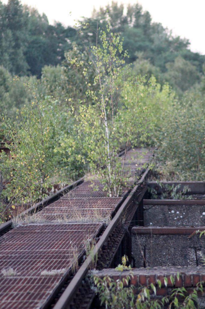 landschaftspark-duisburg-vegetation