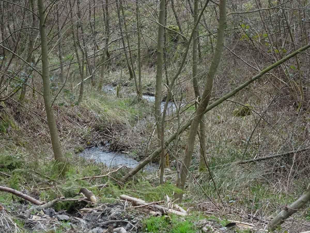 Rundwanderweg: Schloss Gimborn 2