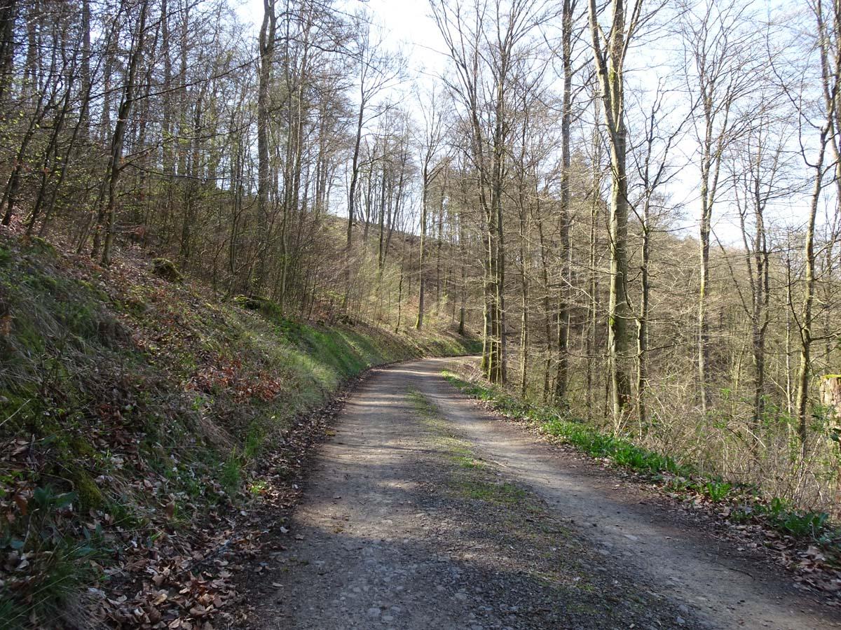 Mehrtagestiur Lieserpfad. Waldweg