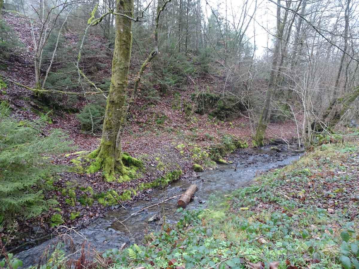 Der Wildwiesenweg 6