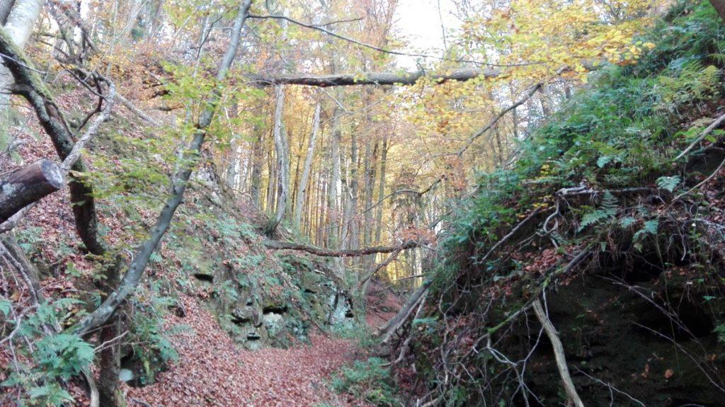 Mullerthal Trail schmaler Pfad