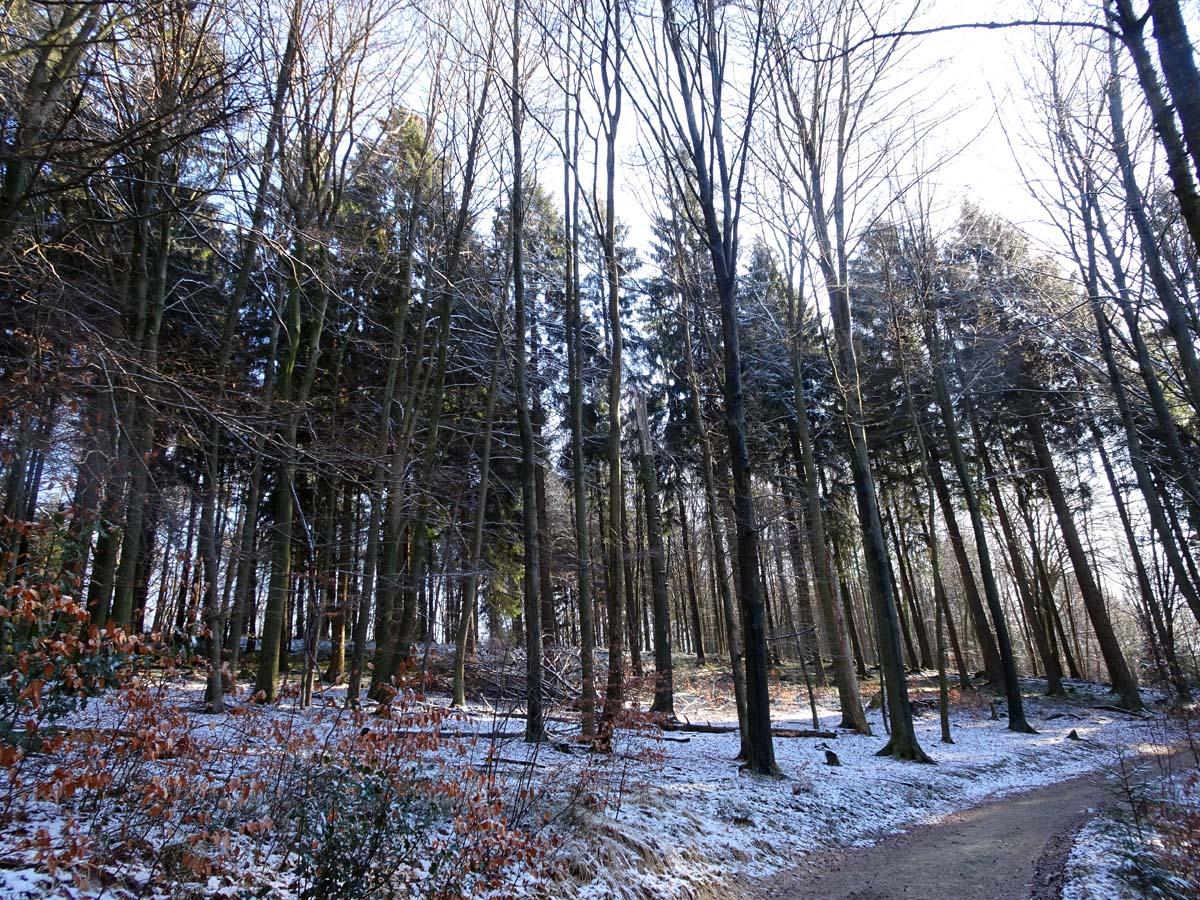Wandern an der Dhünntalsperre - Der D 4 Naturwelten Bäume und Weg