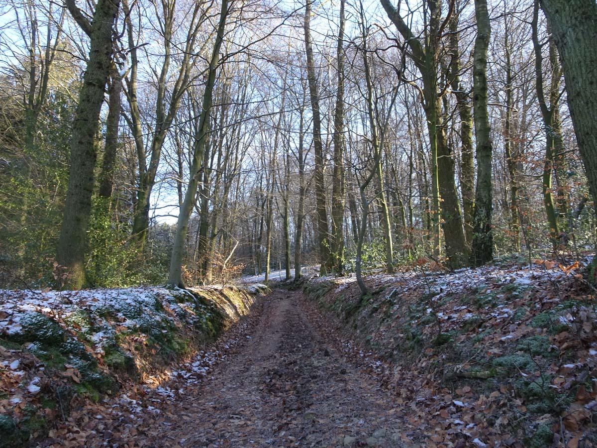 Wandern an der Dhünntalsperre - Der D 4 Naturwelten Hohlweg