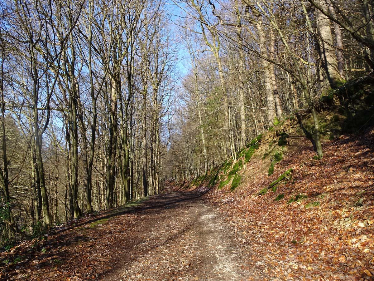 Wandern an der Dhünntalsperre - Der D 4 Naturwelten Weg