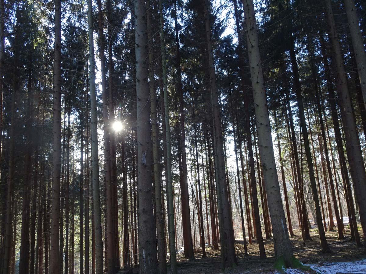 Mein verkorkst schönes Wochenende beim Bloggerwandern in der Pfalz 1