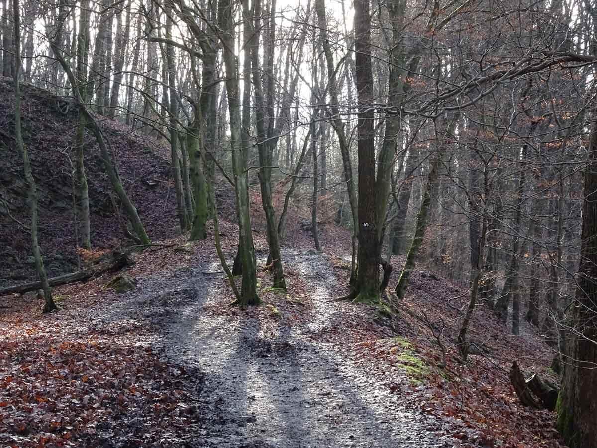Wanderung durch das Gelpe- und Saalbachtal 4