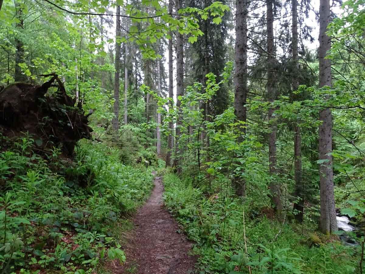U(h)rwaldpfad