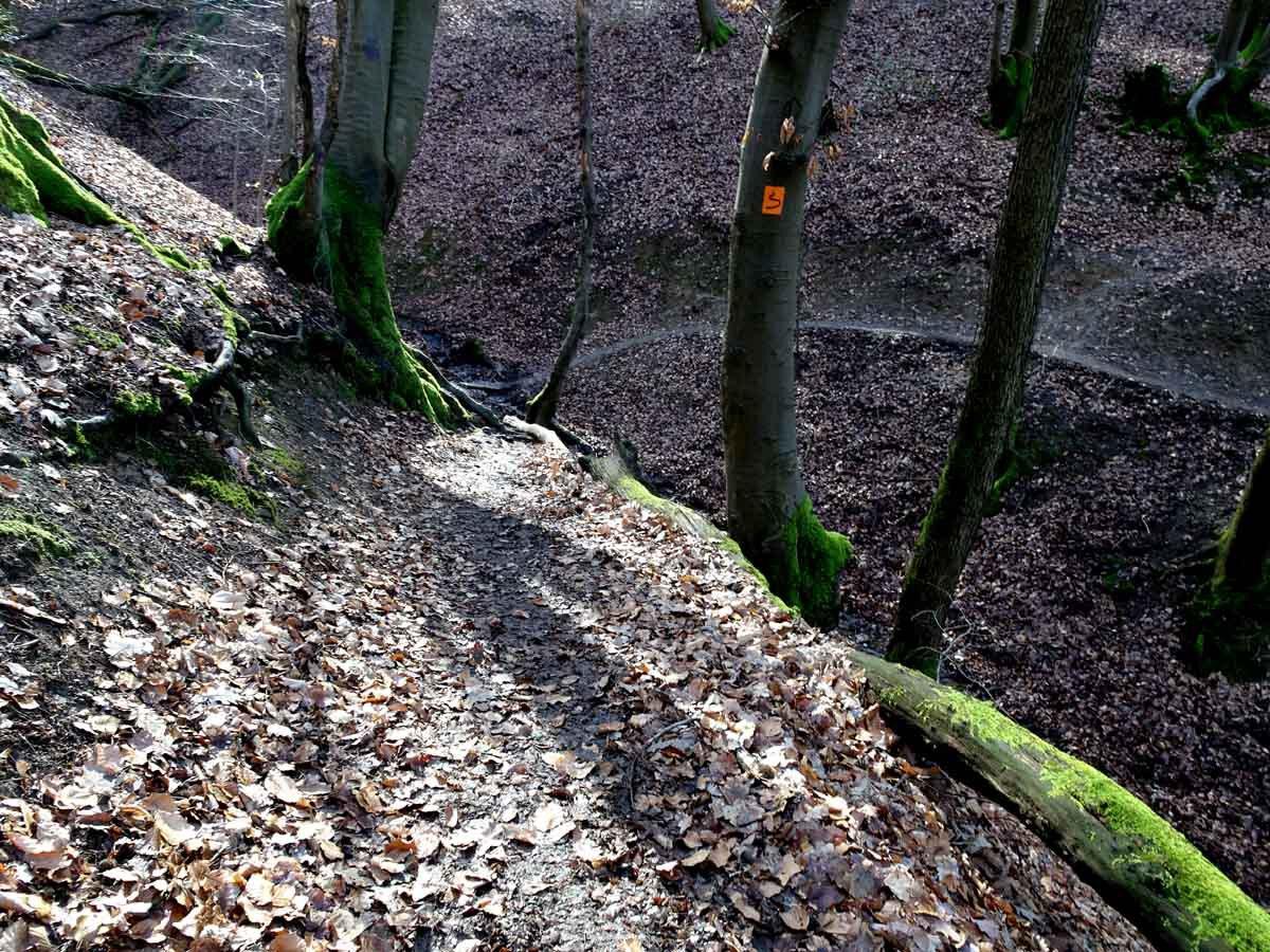 Rundwanderweg Wahnbachtalsperre 5