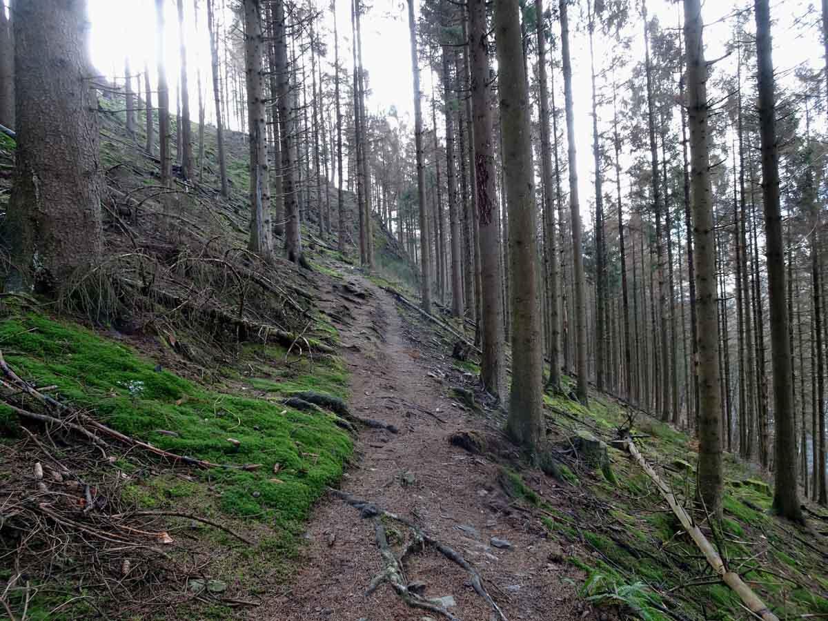 Rundwanderweg Eschbachtal 2
